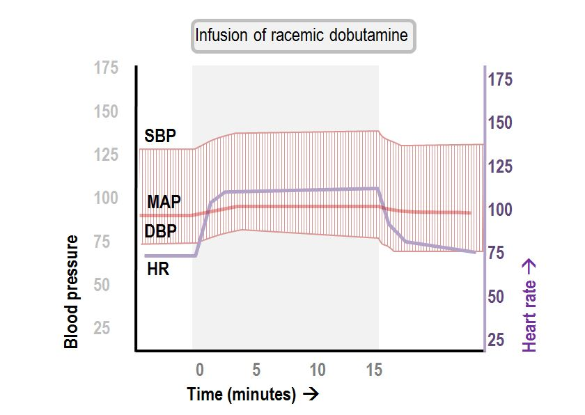 hemodynamic effects of the infusion of racemic dobutamine