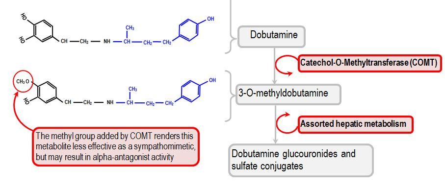 metabolism of dobutamine