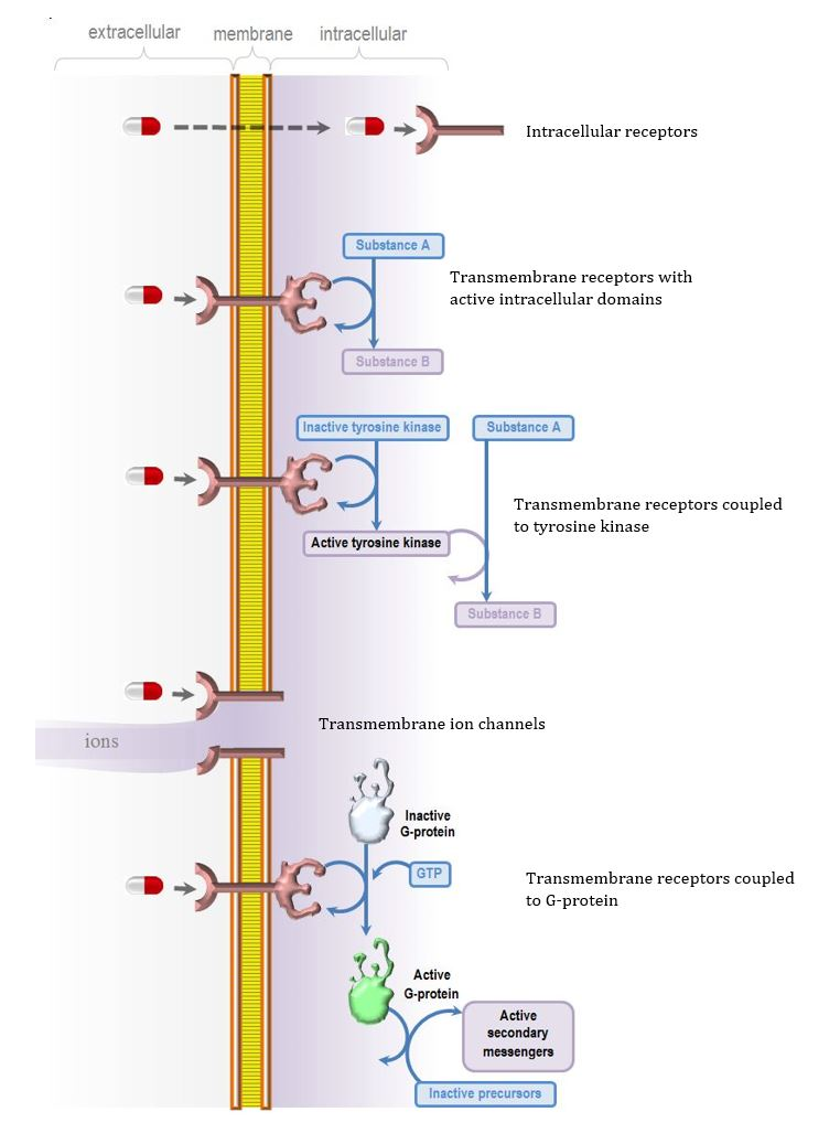 interactions of drugs and receptors