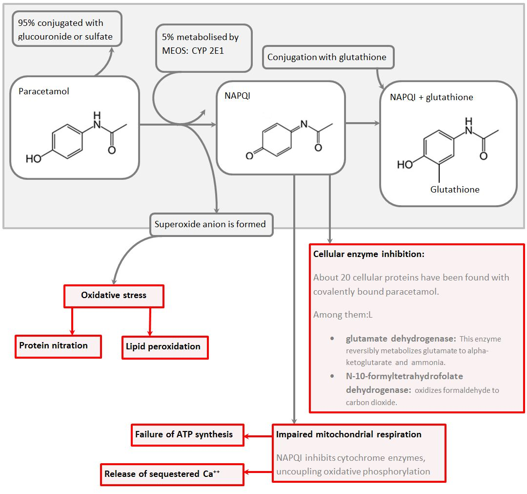 paracetamol toxicity flowchart with medium detail
