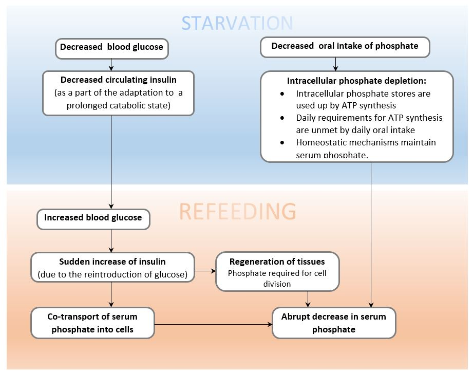mechanism of refeeding syndrome