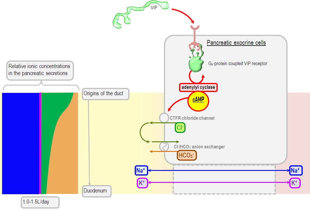 uncontrolled pancreatic secretion as a cause of metabolic acidosis