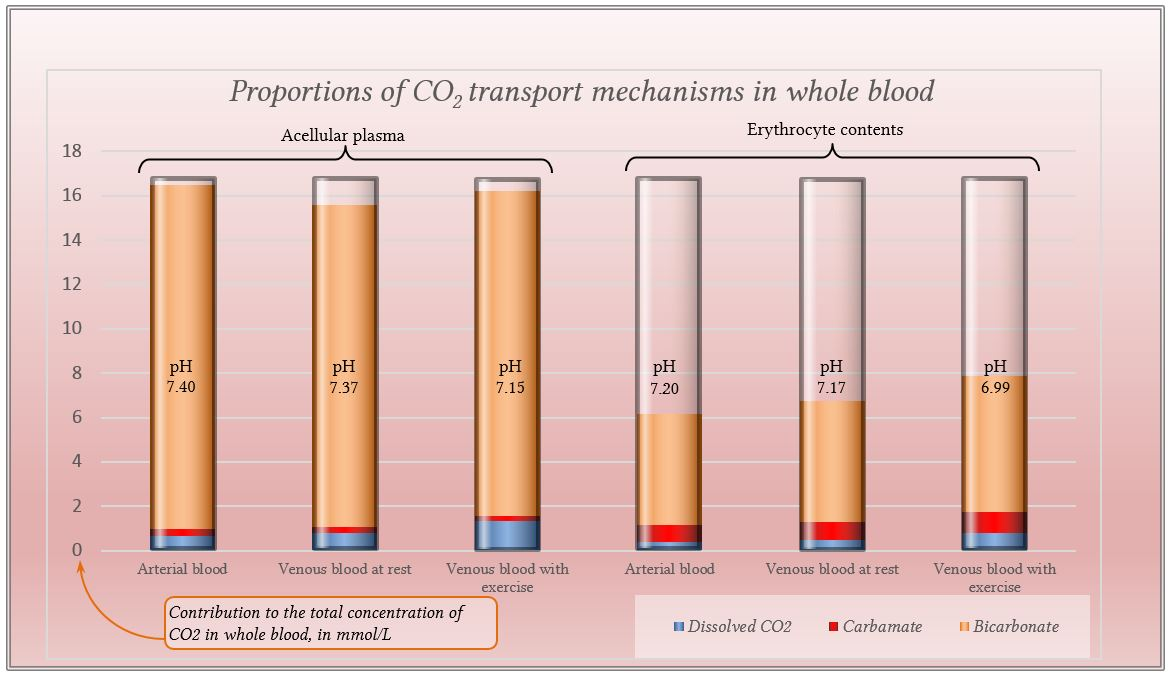 Diagrams of CO2 transport mechanisms in whole blood