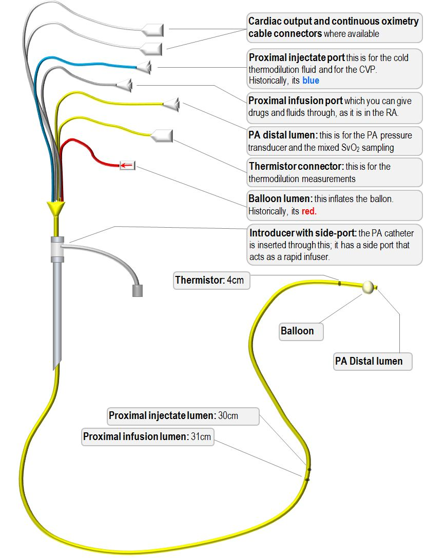 anatomy of the PA catheter
